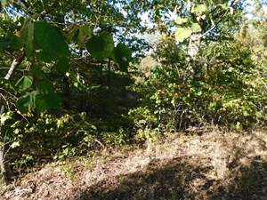 LAND FOR SALE IN SOUTHERN MISSOURI
