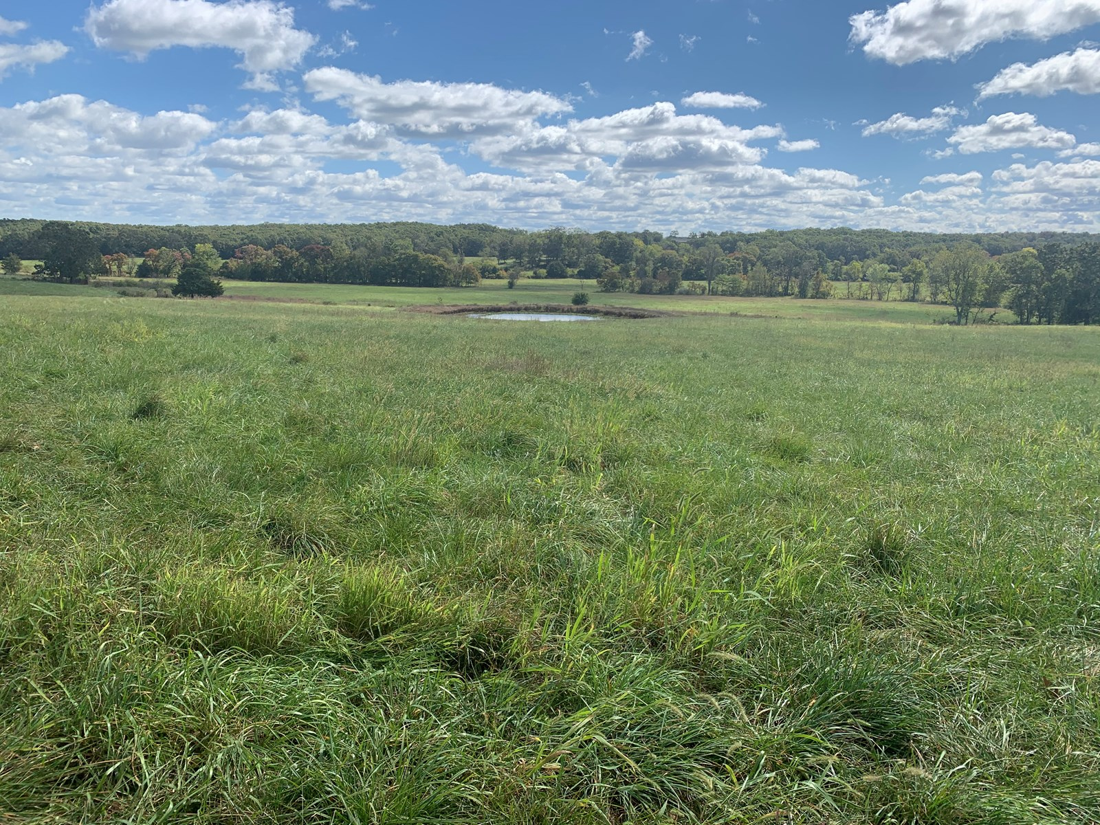 Ranch Land in Southern Missouri For Sale