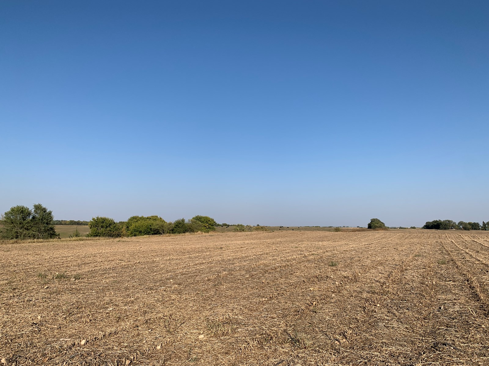 CROP FARM AND BUILDING WITH HUNTING POSSIBILITIES FOR SALE