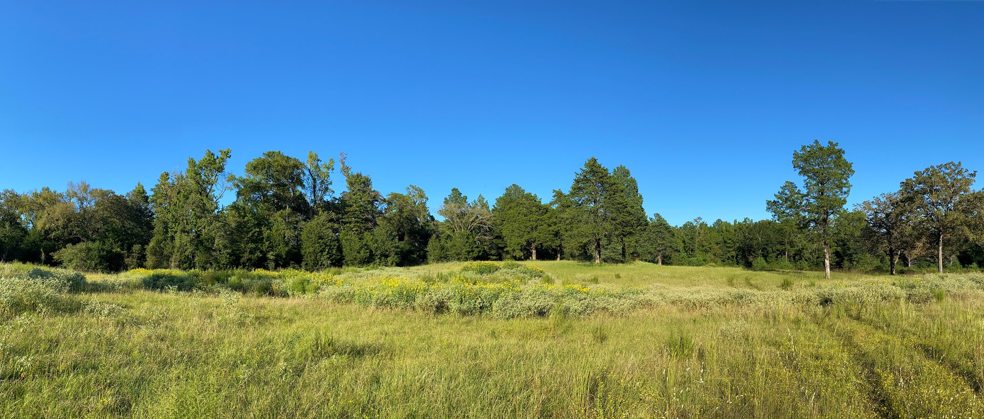 HOMESITE WITH MATURE TREES ON ACREAGE