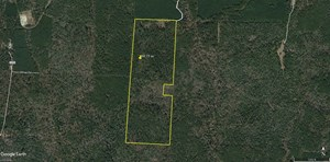 98.75 ACRES HUNTING RECREATION TIMBER LAND FOR SALE