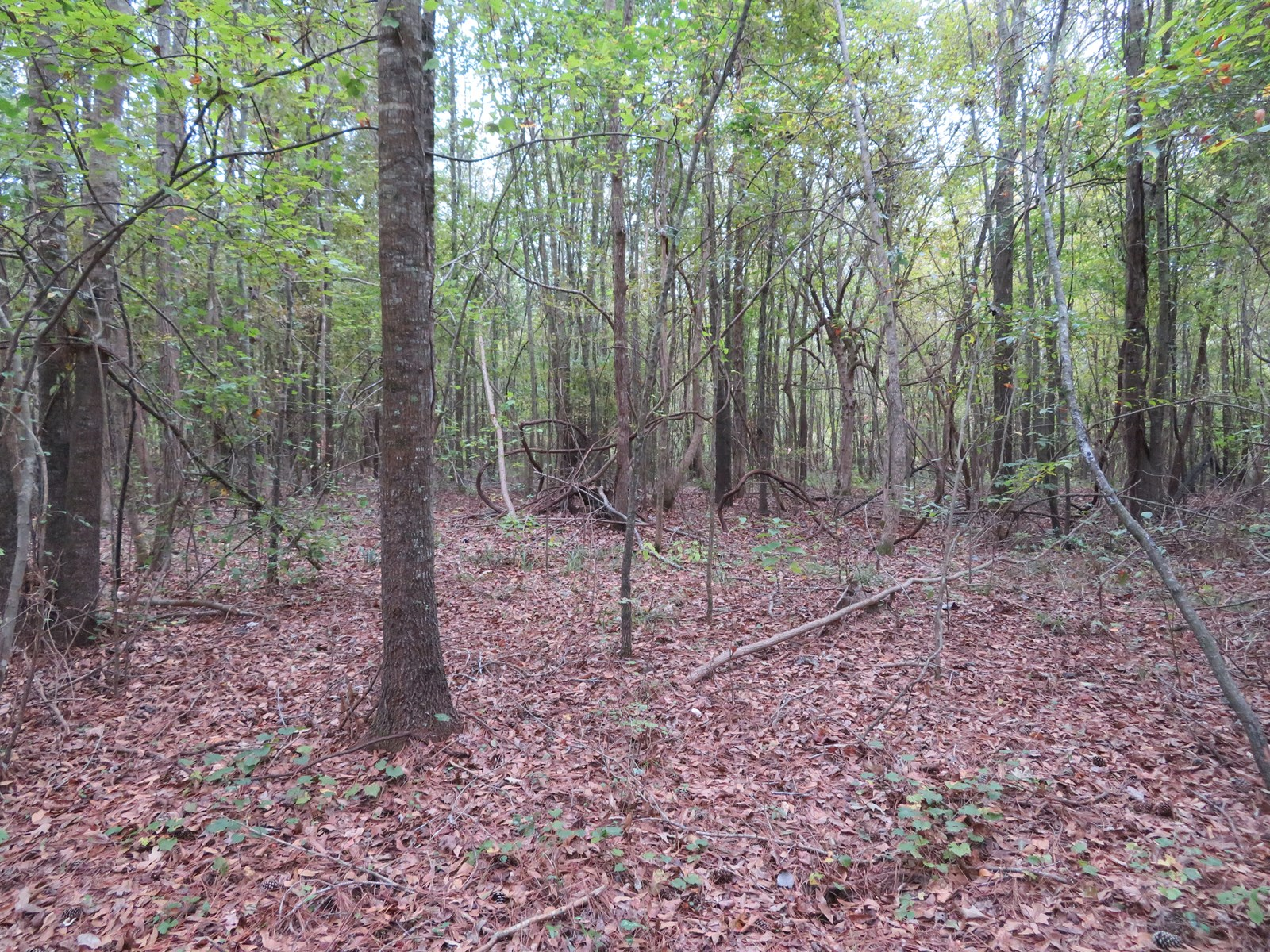 Off-Grid, Hunting Property for Sale in East Texas