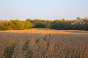 DEVELOPMENT - HUNTING - FARMLAND FOR SALE IN LEE'S SUMMIT
