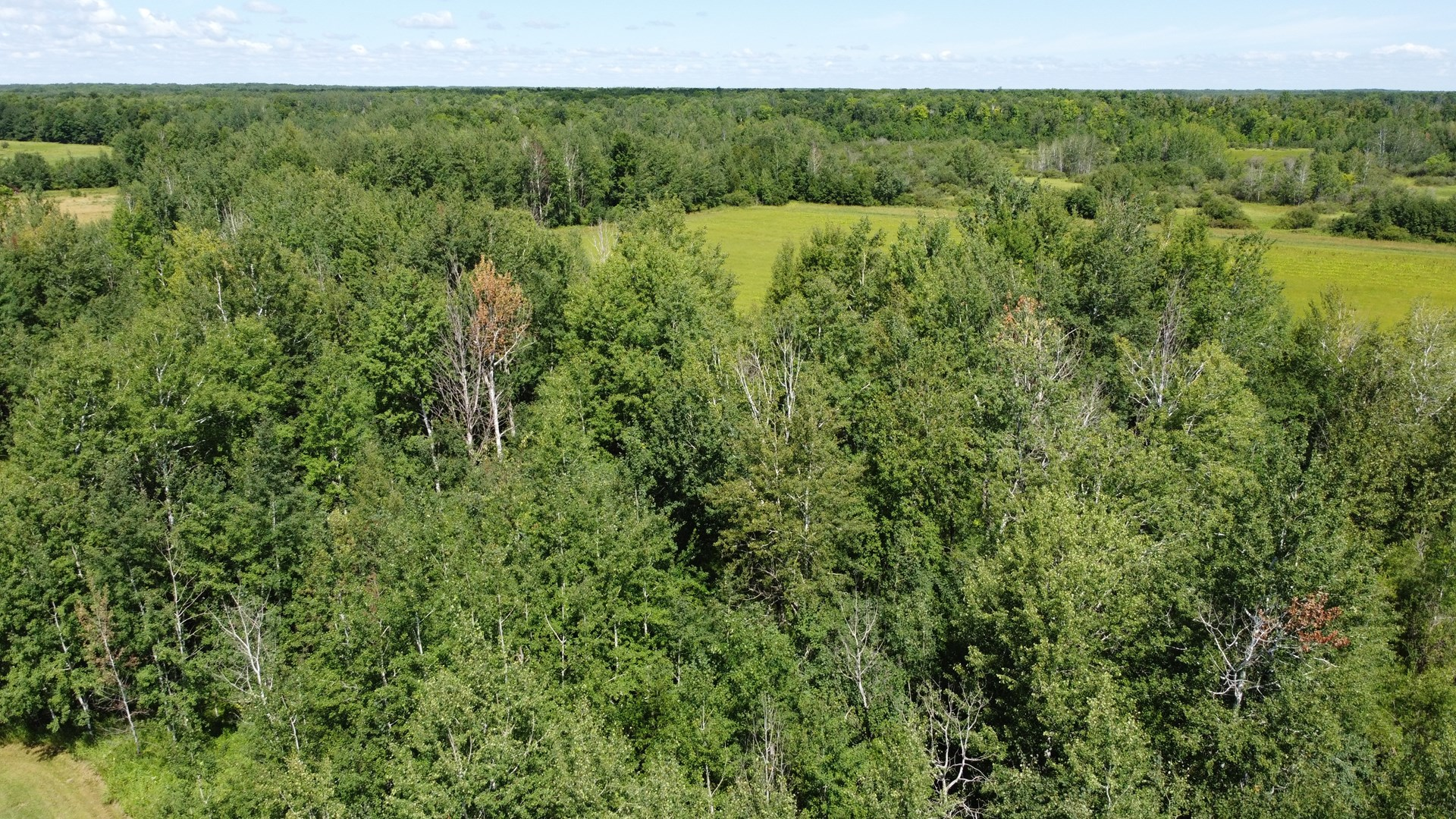 175 Acres of Prime Hunting Land in Mille Lacs Co