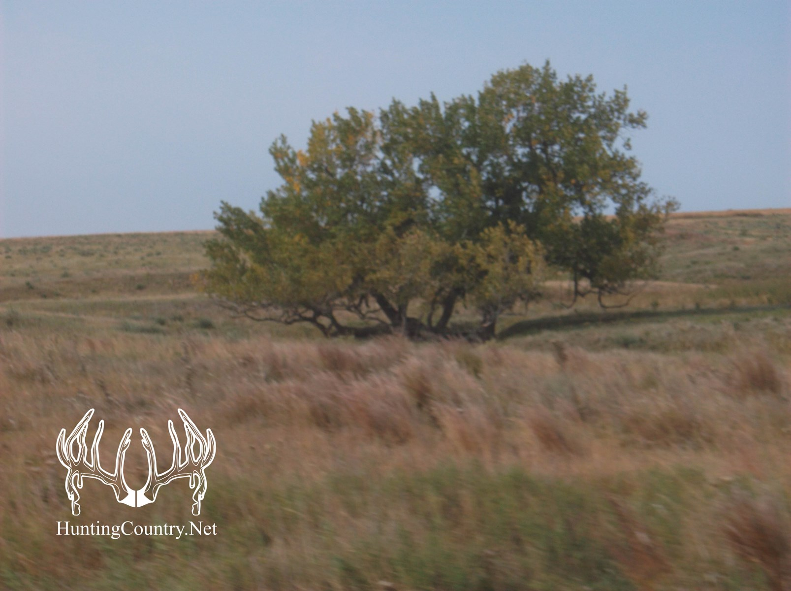 78 acres m/l. Gray County Kansas Land for sale