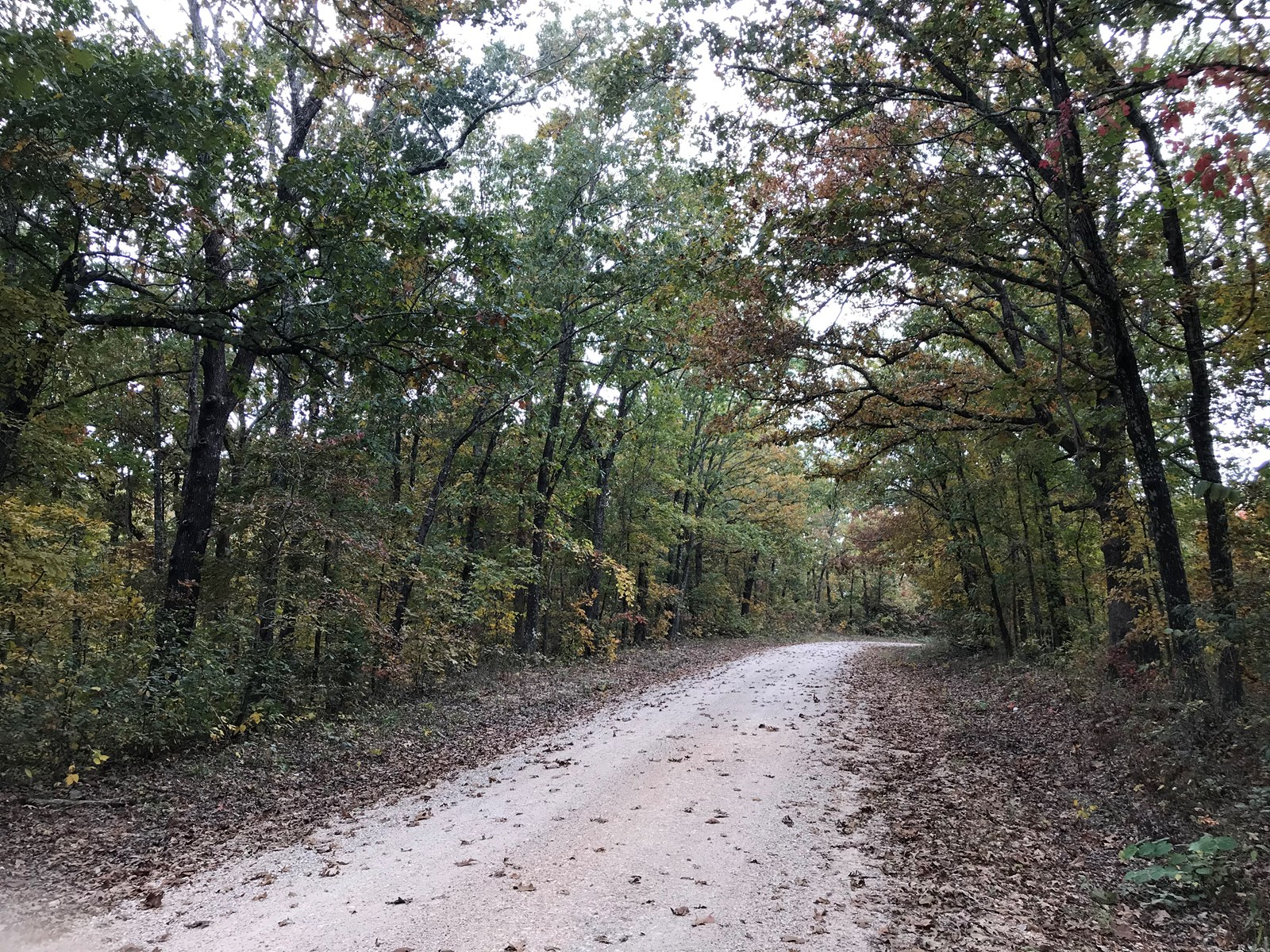 20 acres perfect for your dream home or hunting!