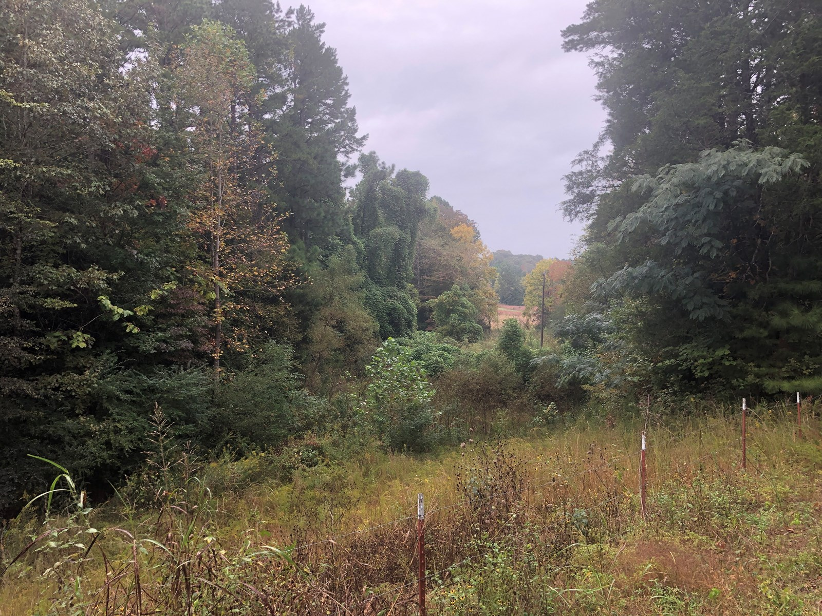 LAND IN TN FOR SALE TO BUILD A HOME ON – HARDIN COUNTY TN