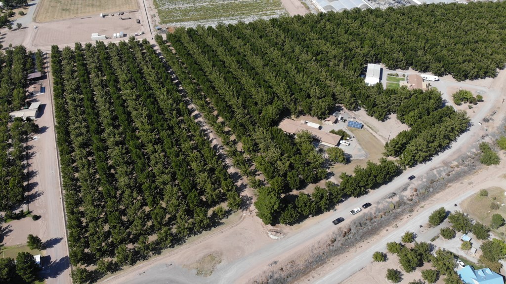 Southern New Mexico Pecan Farm