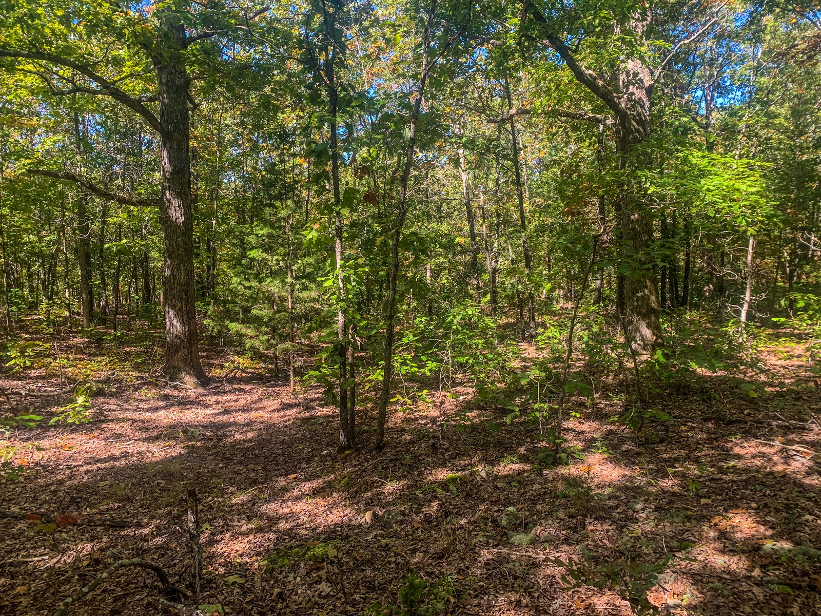 40 acres ready for hunting or building your dream home