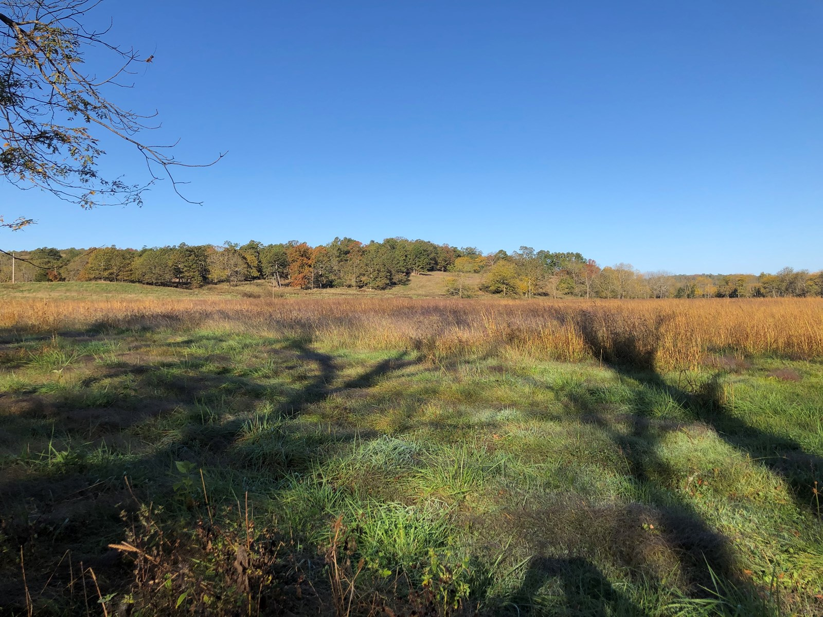 Southern Missouri Farm for Sale, Prime Hunting Land for Sale