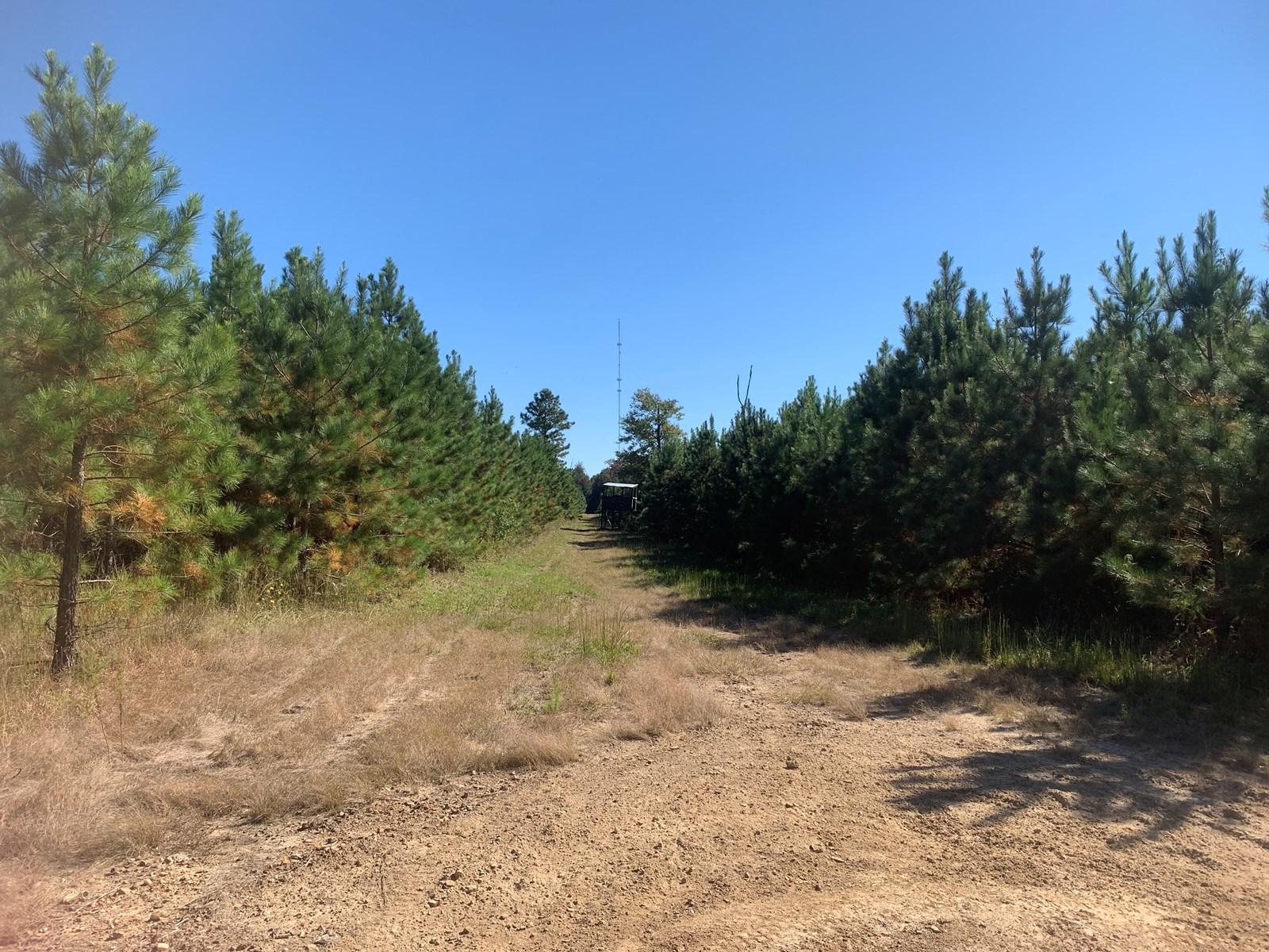 Young Planted Pine Timberland for Sale Near El Dorado, AR
