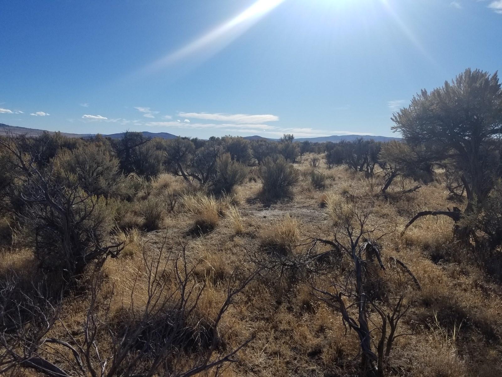 160 +/- Acres/Level/Views/Wildlife/Recreation
