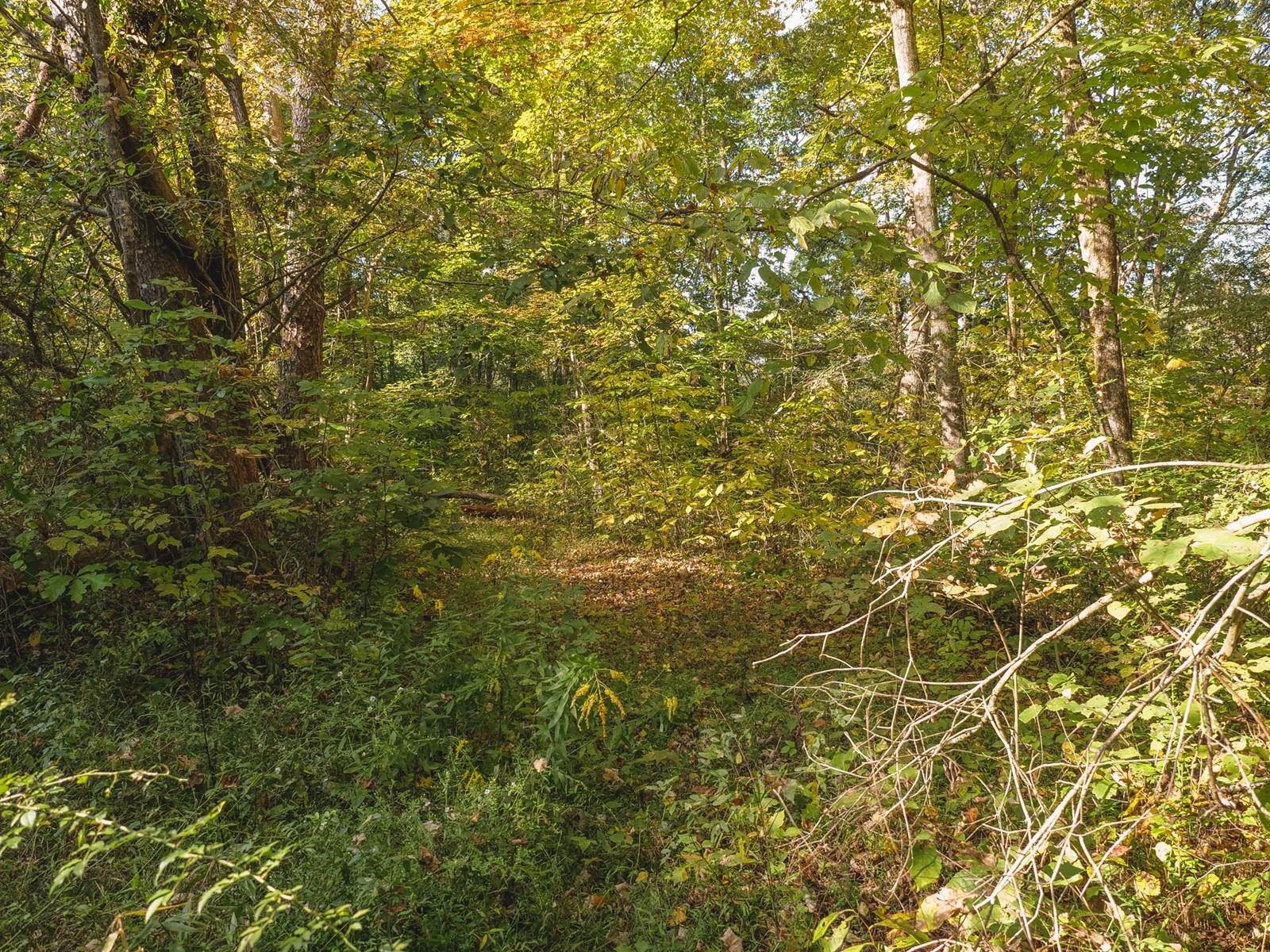 45 Acres of Wooded Land in East TN For Sale