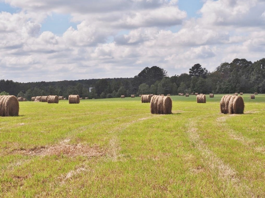 80 Acres Pasture Land for Sale Hwy 98, South MS