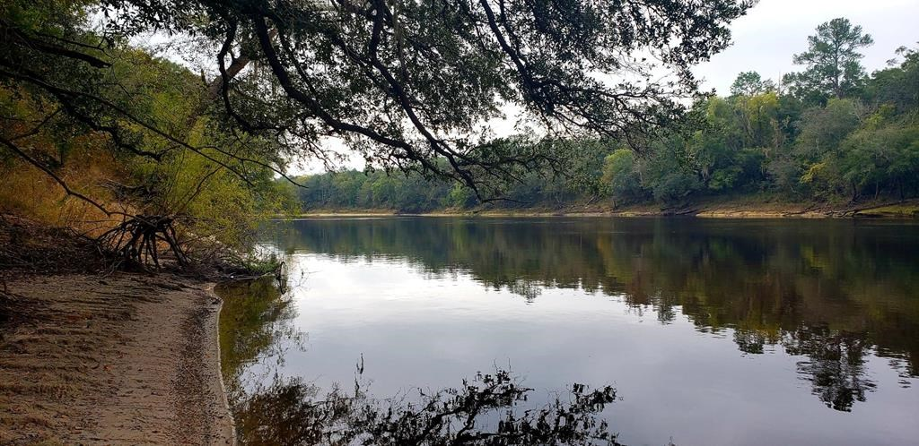 BEAUTIFUL SUWANNEE RIVER!