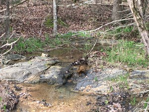 ARKANSAS LAND FOR SALE, TIMBERLAND AR HUNTING LAND 173 ACRES