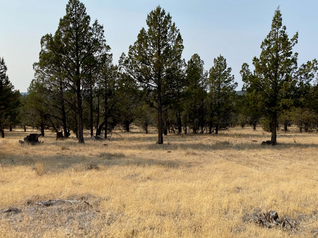 Vacant Land for Sale in Alturas, CA