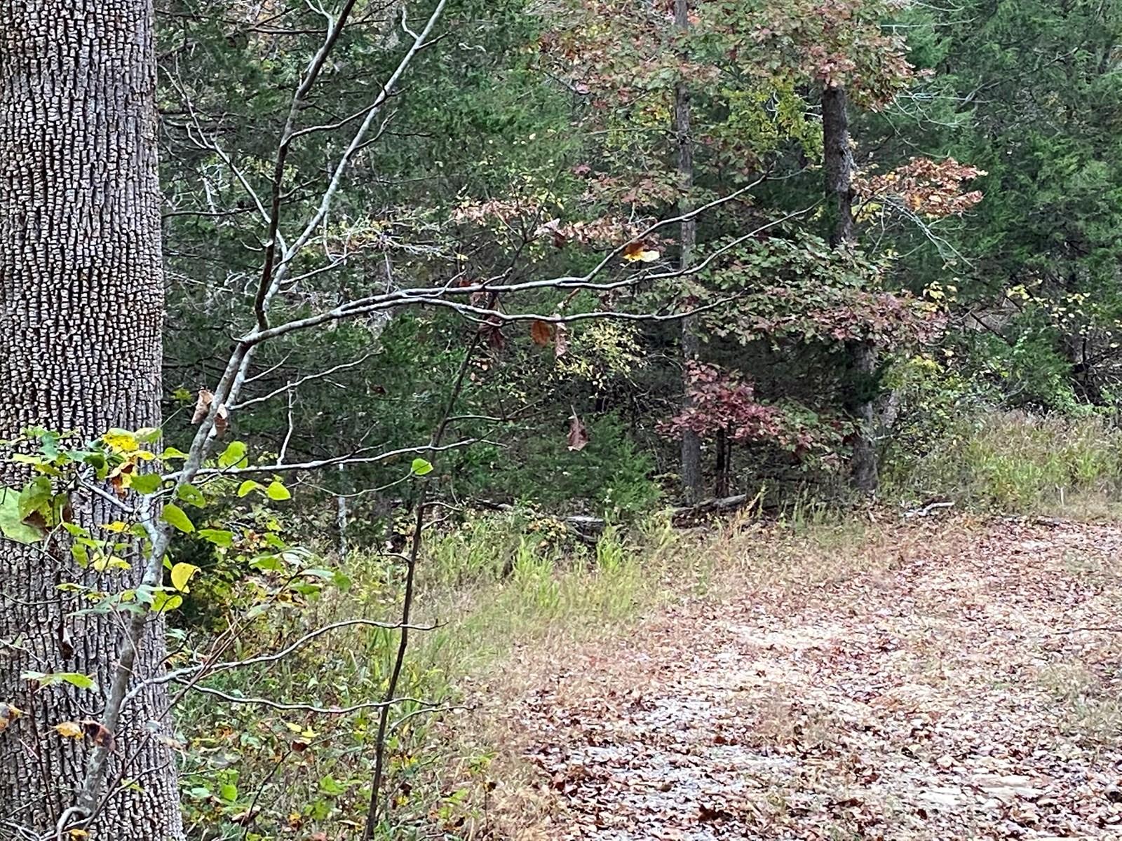 AR Recreational property Deer Hunting Land 11 acres woods