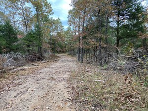 ARKANSAS LAND FOR SALE HUNTING LAND IN AR TIMBERLAND
