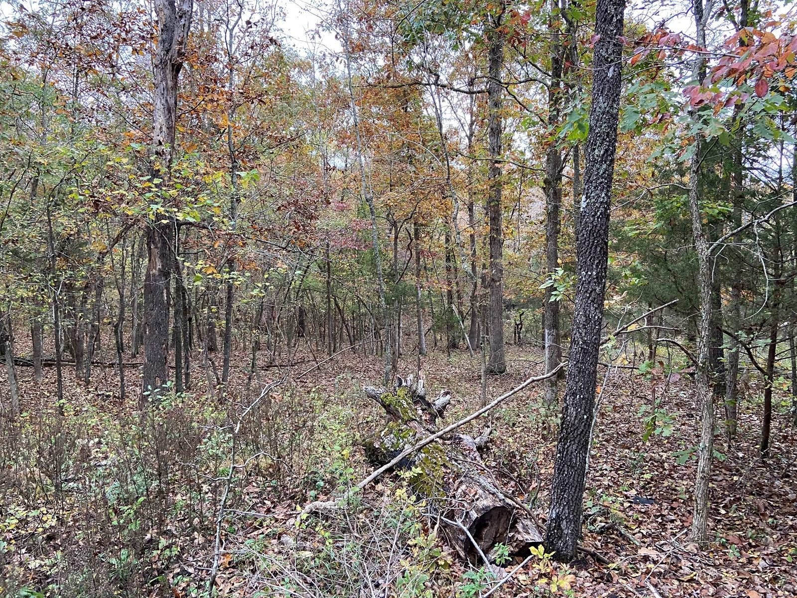 Arkansas Land for sale Hunting land, recreational property