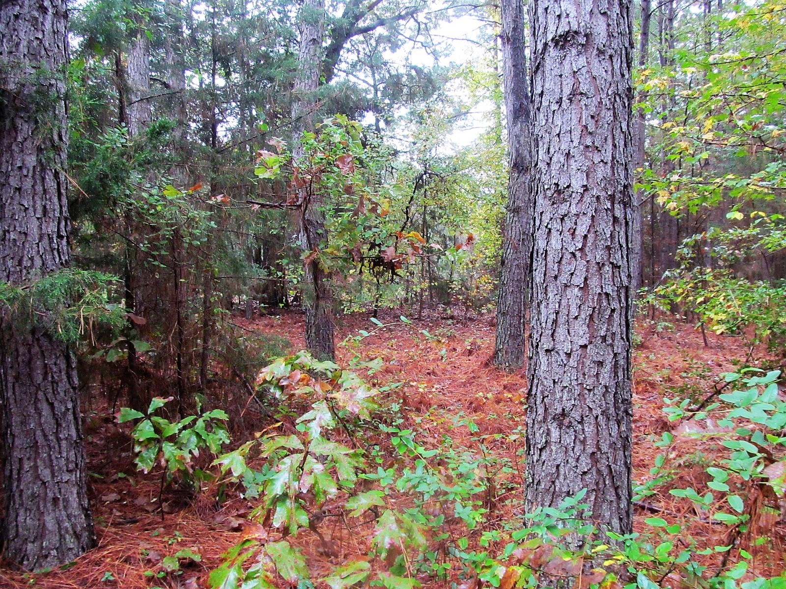 20 WOODED ACRES IN WOOD AND UPSHUR COUNTIES - EAST TEXAS