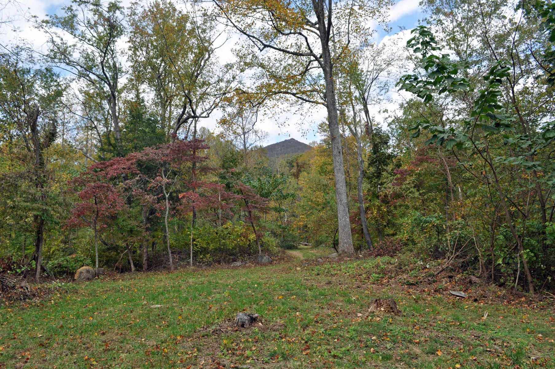 10 Acre Wooded Tract Near National Forest: Bedford, VA
