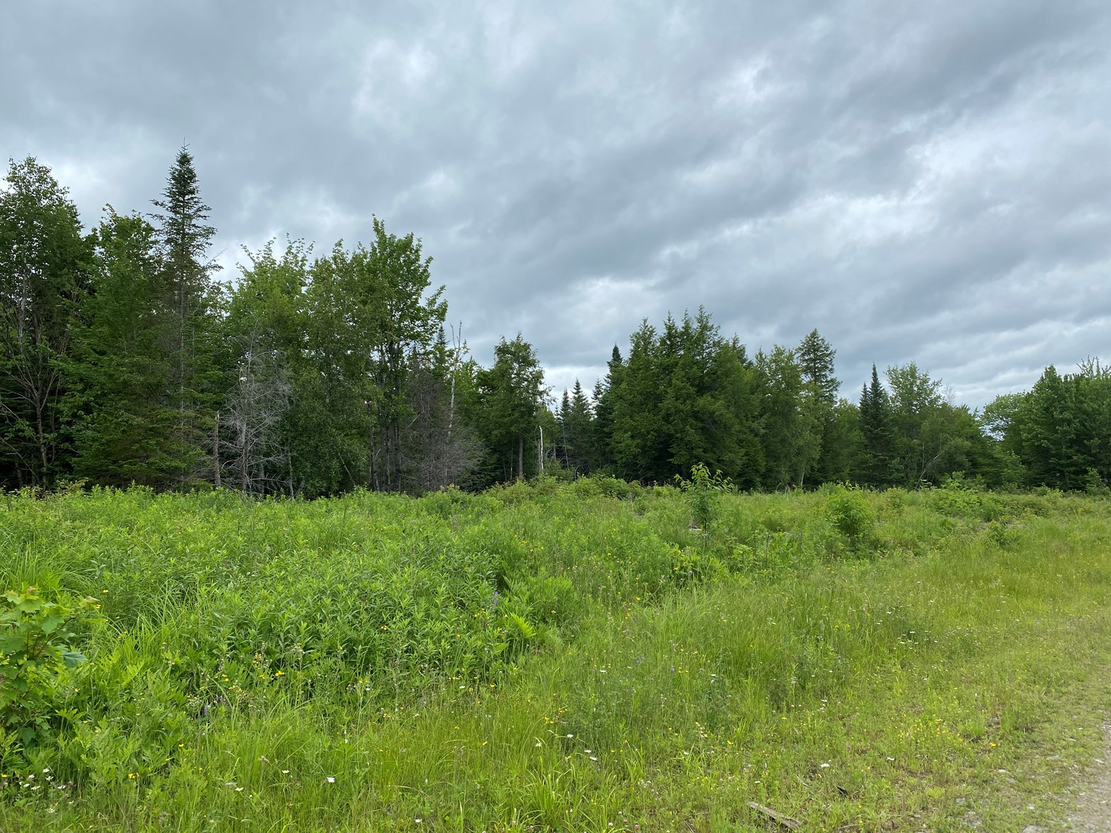 230± Acres Maine Land For Sale