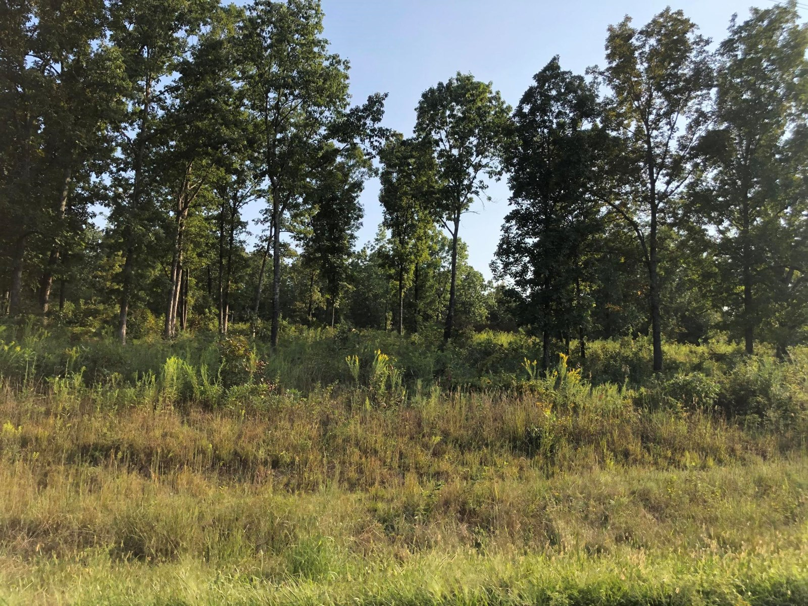 Land for Sale in the Ozarks