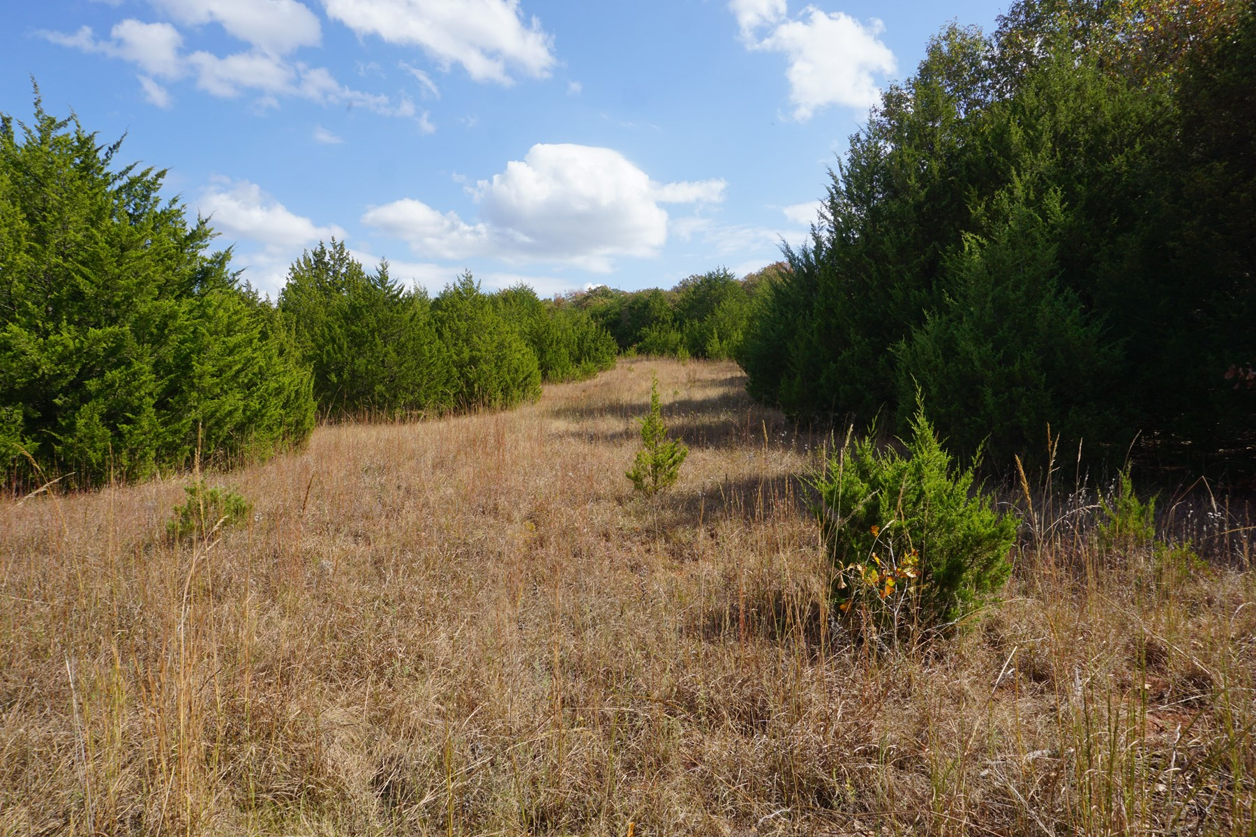 No Reserve Land Auction, 79 Acres +/-, Nov 22 @ 1:30