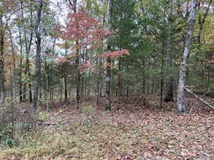 LAND FOR SALE IN NORTH ARKANSAS, HUNTING LAND, WOODS IN AR