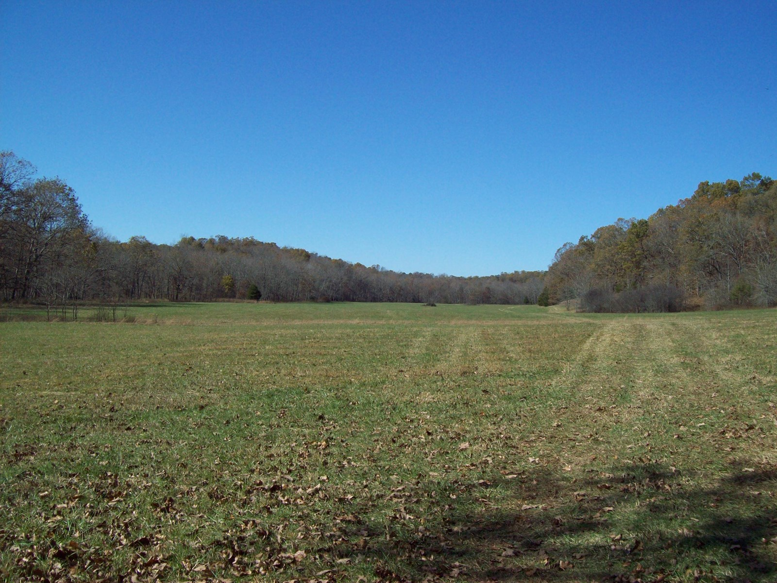 367.5 Acres near Piedmont Missouri