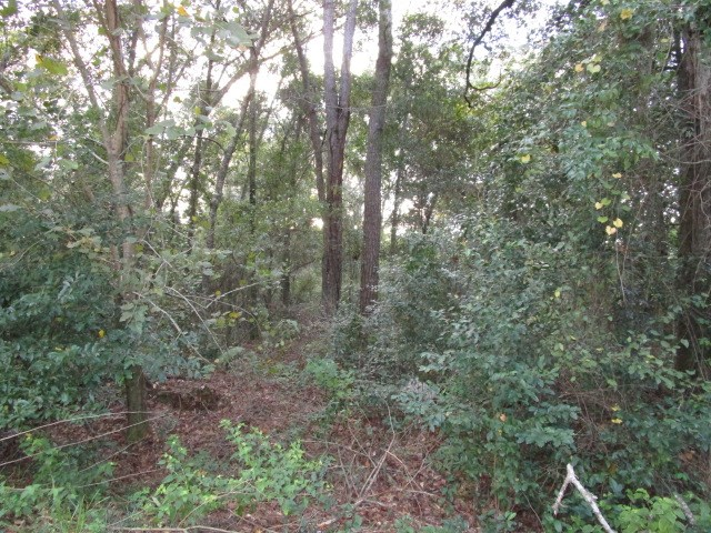 Private lot in Tallahassee FL close to colleges for sale