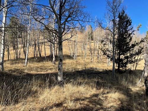 Central Colorado Mountain Property for sale