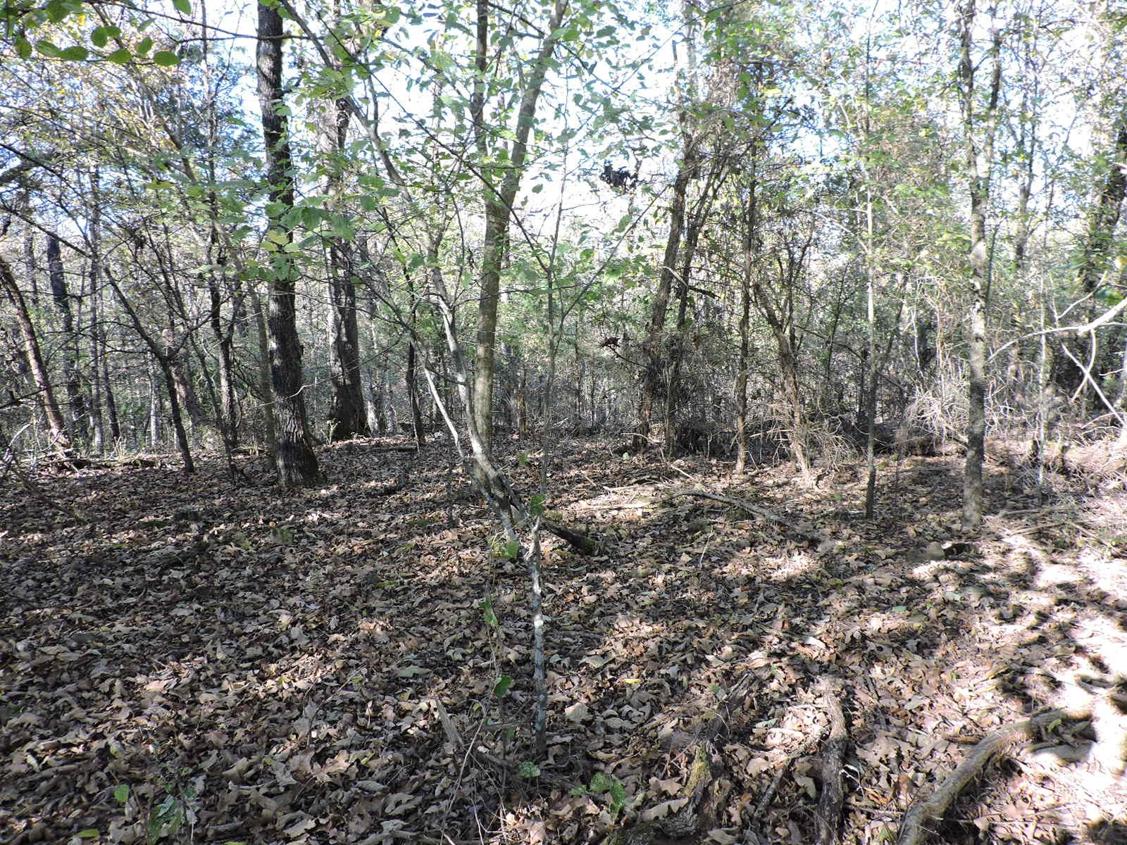 3 Wooded Acres M/L