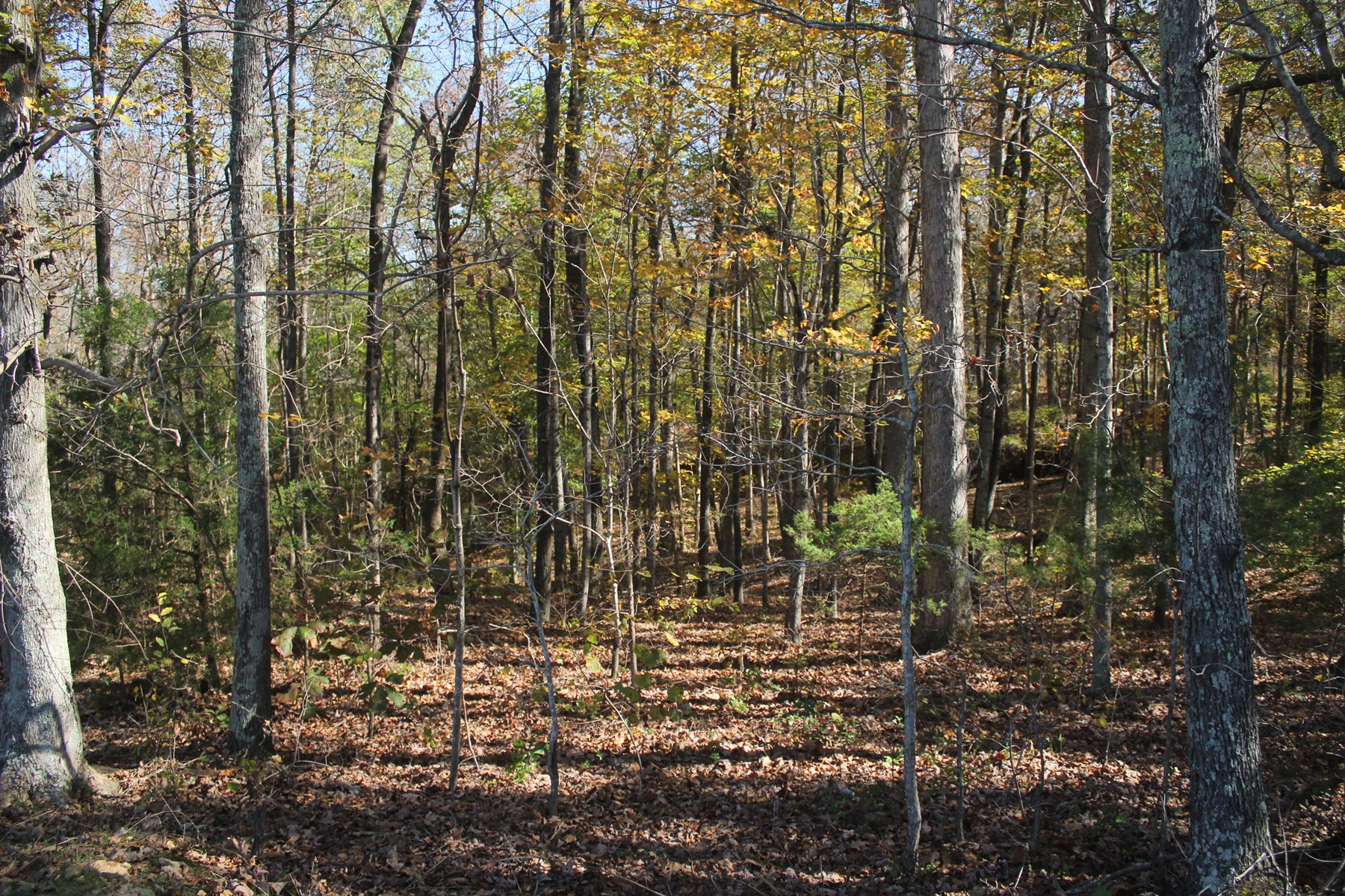 Recreational building hunting timber land for sale TN