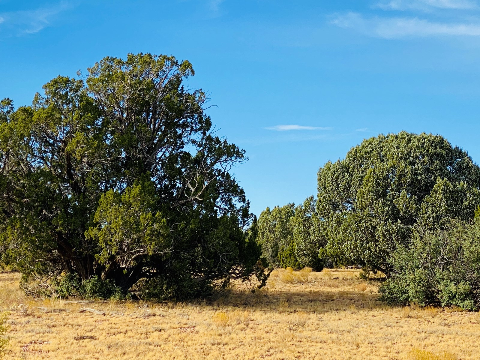 Two 5 Acre Mountain Tracts for Sale in Northern AZ