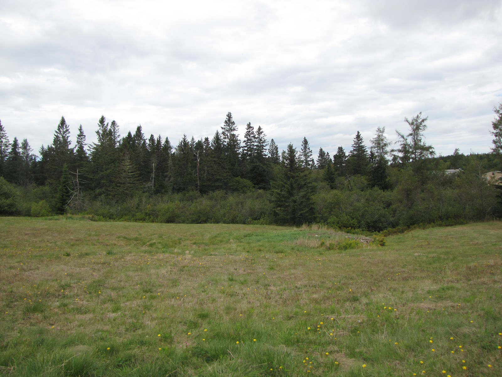 Buildable land lot in Downeast Maine