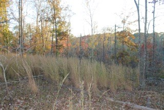 Land with Acreage for Sale in Mt. Pleasant, Tennessee