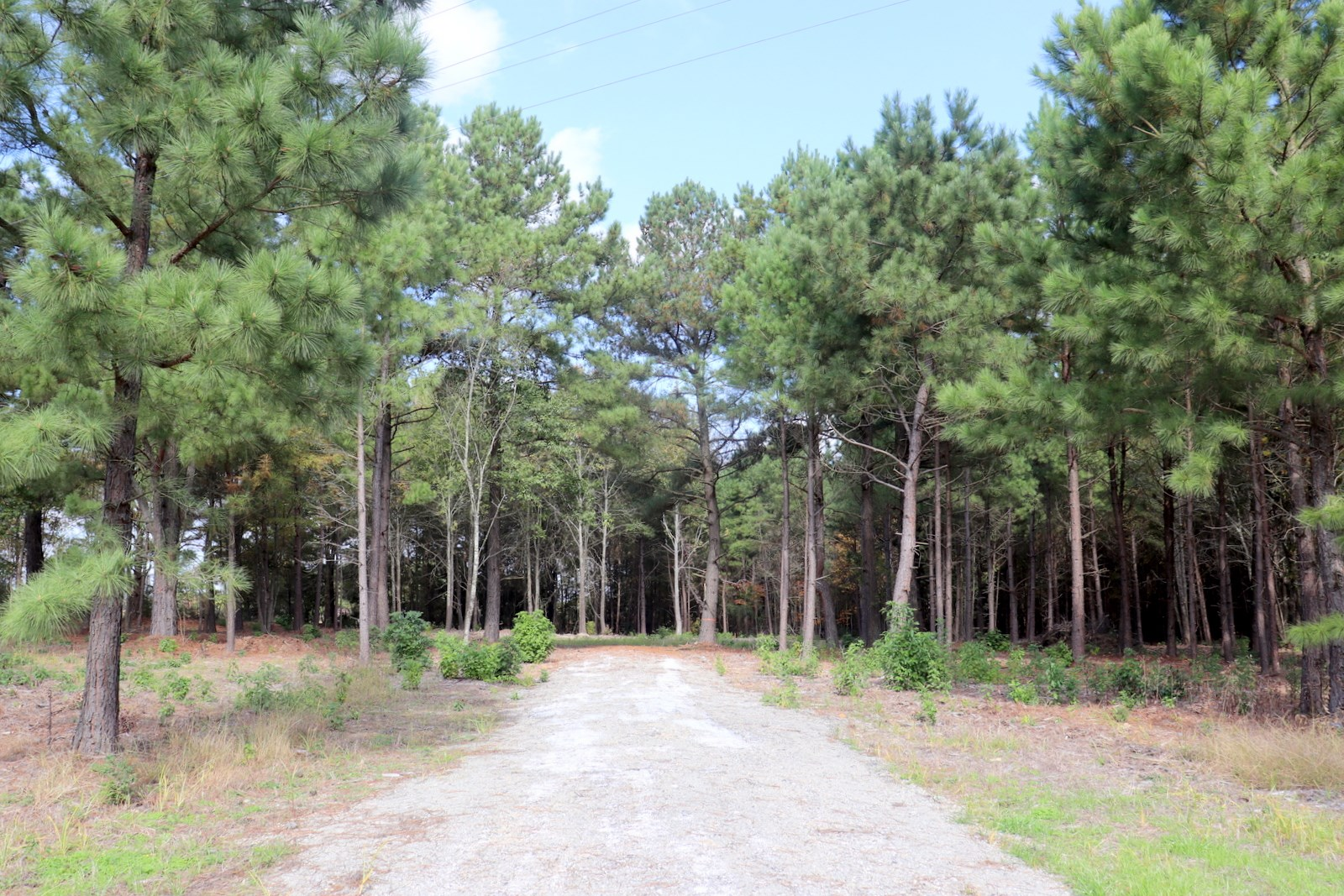 QUITMAN TEXAS LAND FOR SALE - WOOD COUNTY - EAST TX ACREAGE