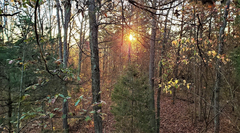 64 acres of managed Hunting land, Cabin in Adams County Ohio