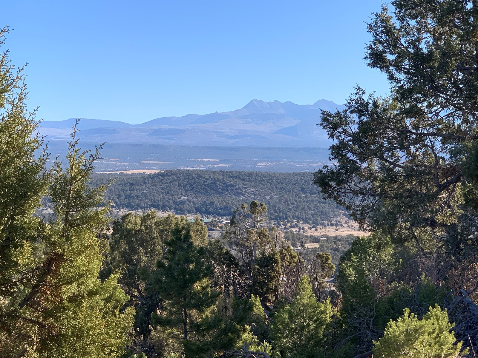 Private wooded lot with mountain views for sale, Mancos, CO