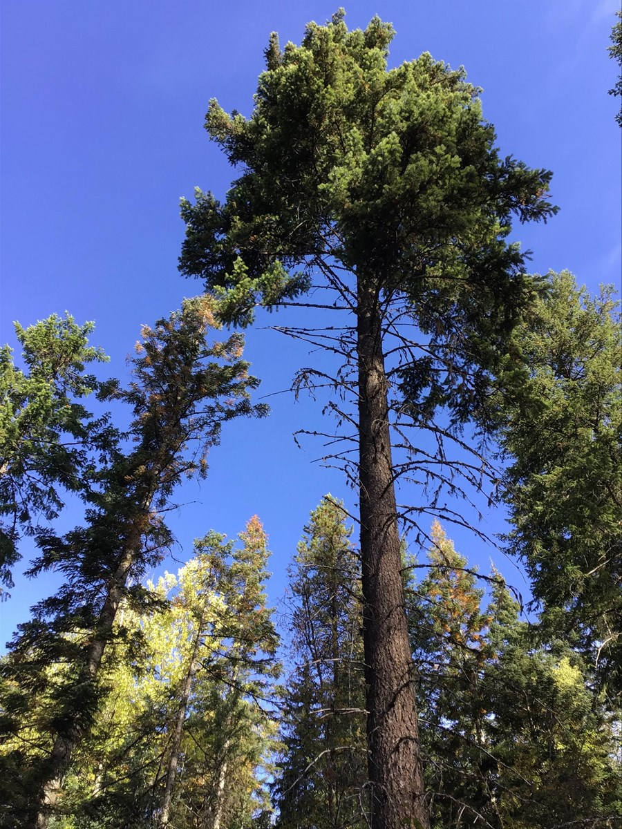 29+ Acres Of Very Private North Idaho Recreational Property