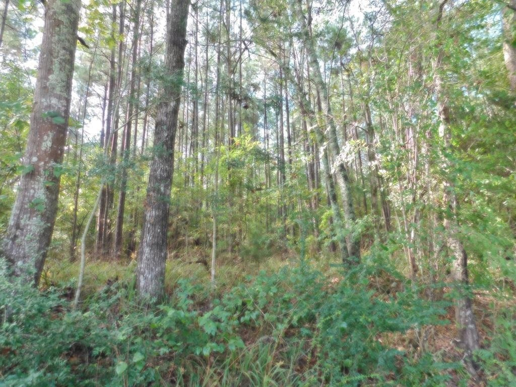 27 Acres Land for Sale Centreville, MS
