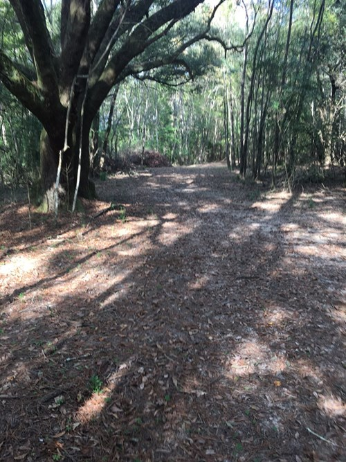 AFFORDABLE DEER HUNTING PROPERTY - WHY LEASE? YOU CAN OWN!