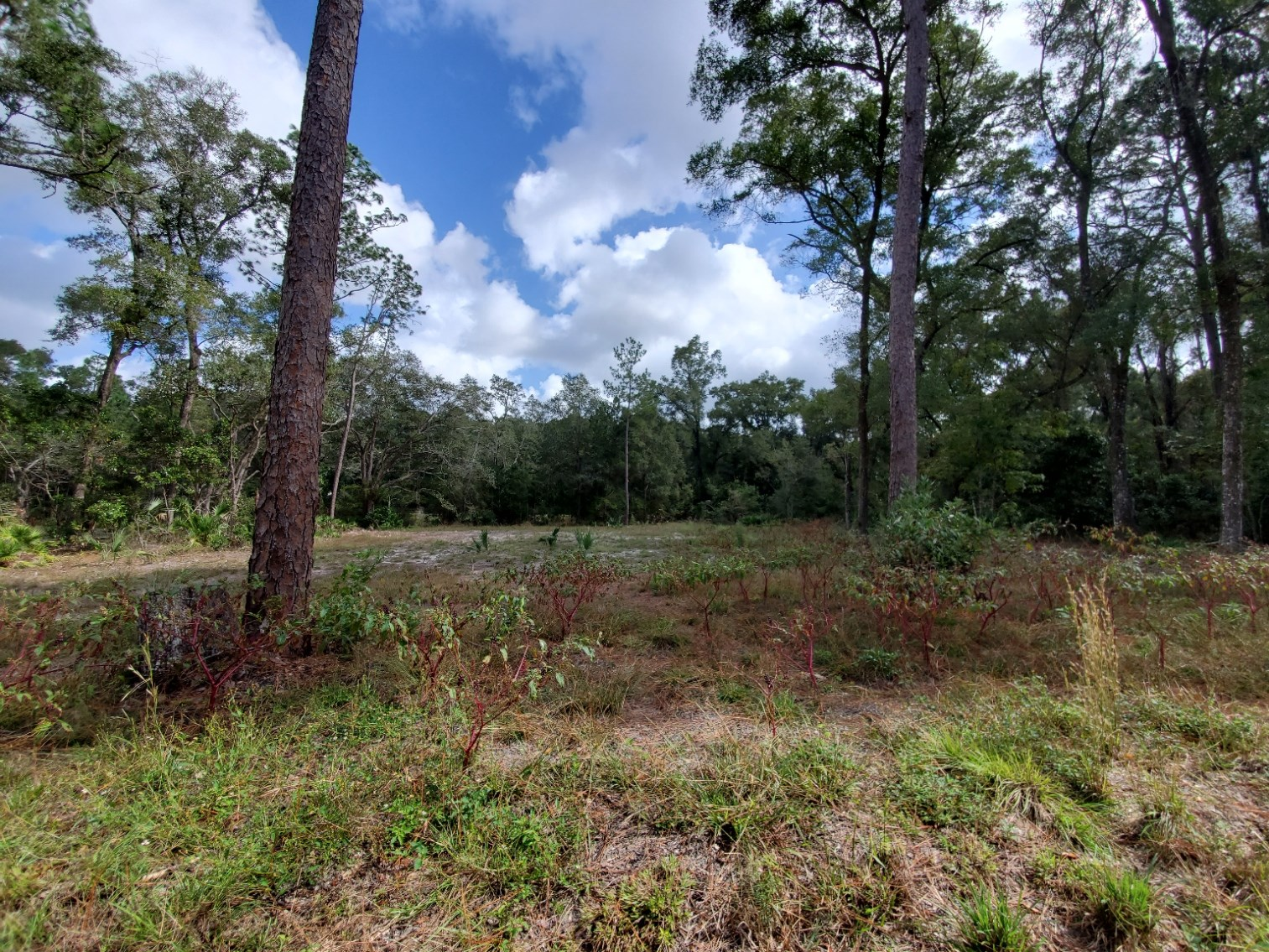 1 acre cleared Homes Only, Chiefland, FL, Levy County