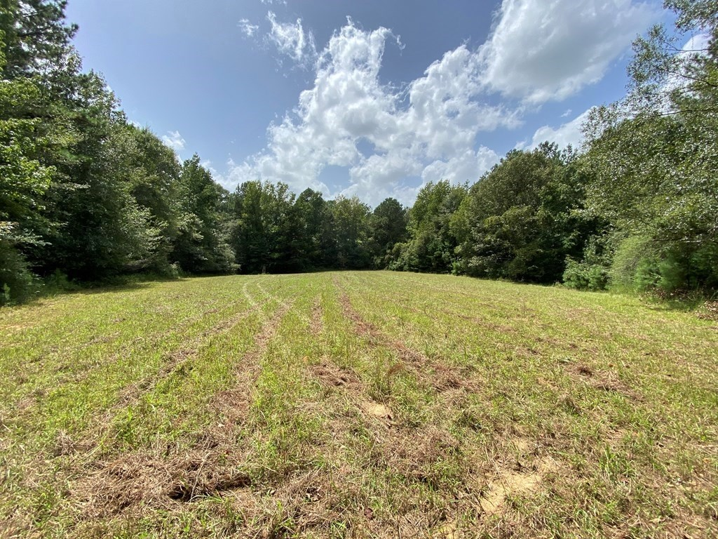 Secluded 39.9 Acres, Off-Grid Camp For Sale in Amite Co, MS