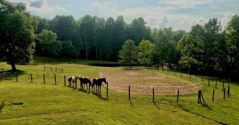 House, Land, Pond, Horse Barn! Gorgeous Setting! Halifax, VA
