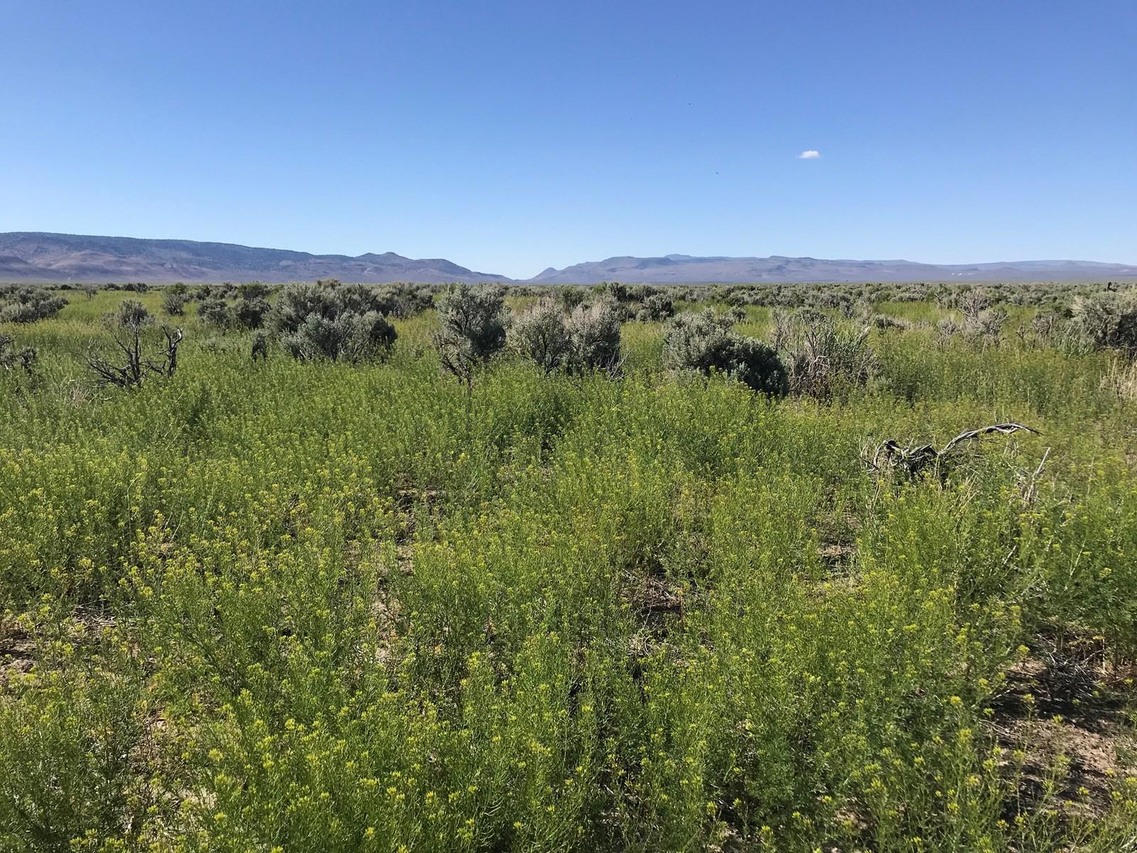 320 Acres Land for Sale, Duck Flat, Mule Deer Hunting