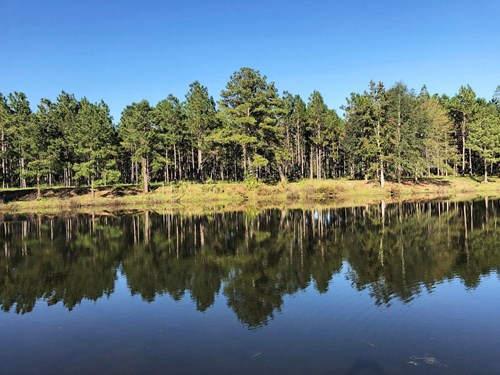 NORTH FLORIDA DREAM FARM: POND, PASTURE, PINES, MORE.