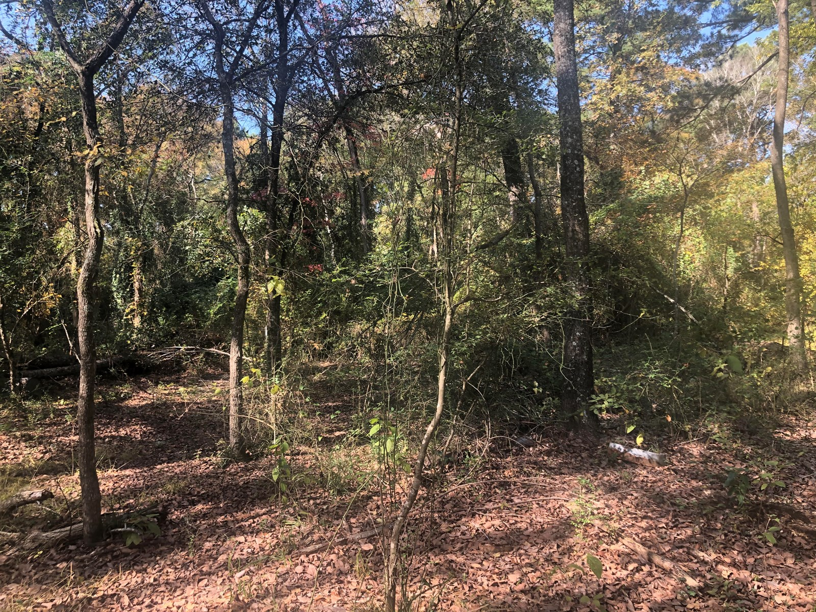 39+ Acres PROPERTY FOR SALE IN ANDERSON COUNTY